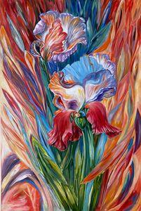 Irises te fall