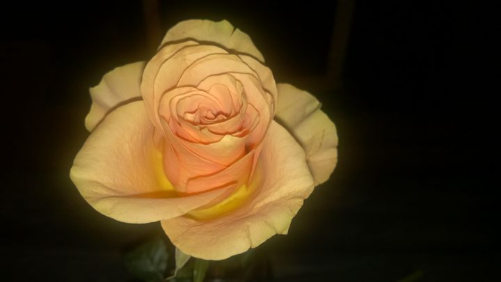 Blush Rose - Shelly Breeden