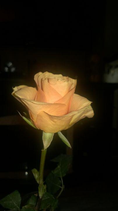 Peach Rose - Shelly Breeden