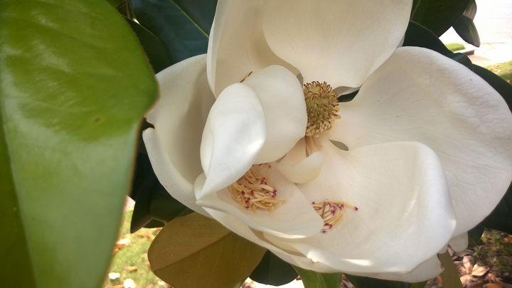 Magnolia 3 - Shelly Breeden