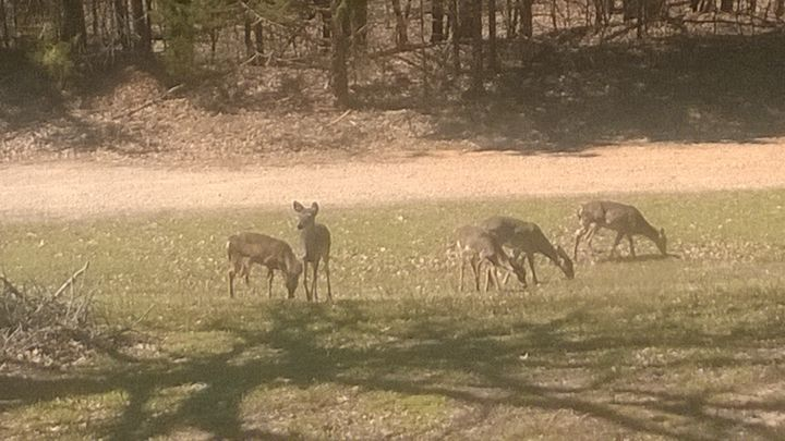 Yes, Deer - Shelly Breeden