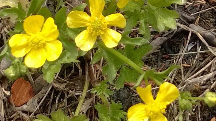 Spring#s first breath - Shelly Breeden