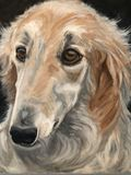 portrait of a russian wolfhound