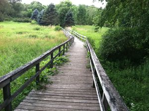 Grassy Boardwalk