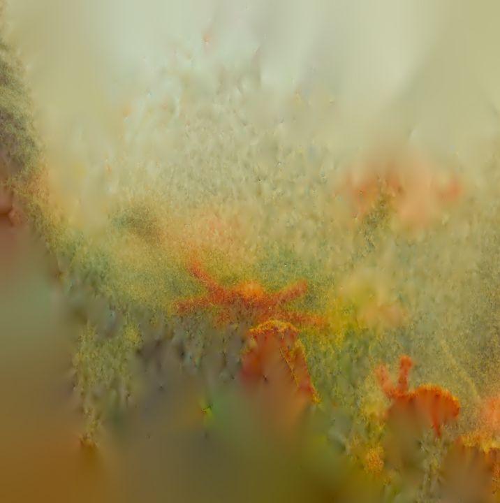 Dreamy surreal flowers - Pura Vida Visions