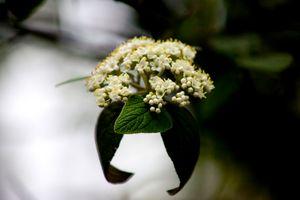 Mother Flower