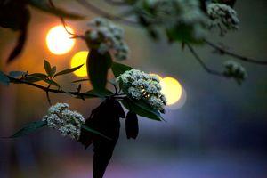 Flowers & Lights
