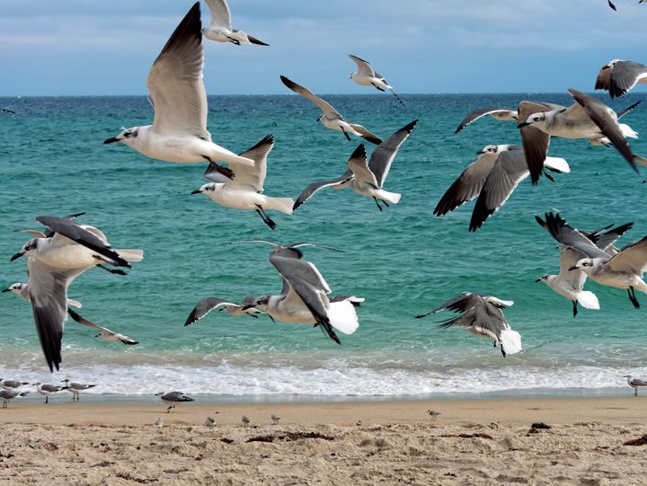 Flock of Seagulls Flying Over Beach - Jill Nightingale