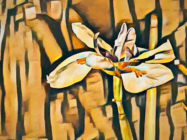 Shades of Gold - Jill Nightingale