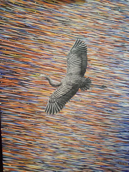 Heron Soaring - Cedric X