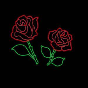 Glowing rose in the dark