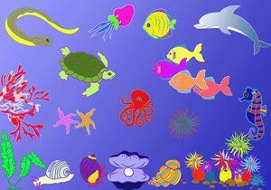 colorful ocean floor