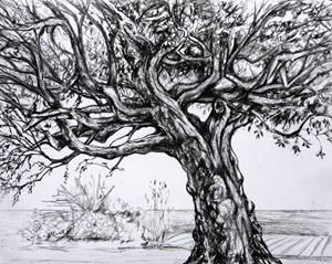 Tree of Main Beach