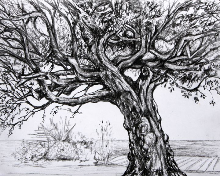 Tree of Main Beach - Al Esquerra