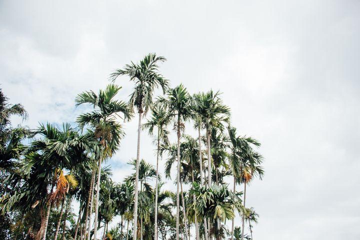 Palm Trees - Maivab Adventures