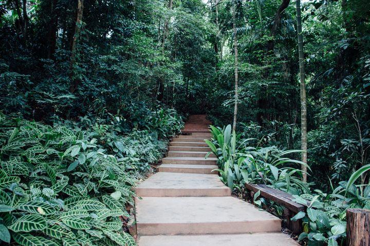 Green Path - Maivab Adventures