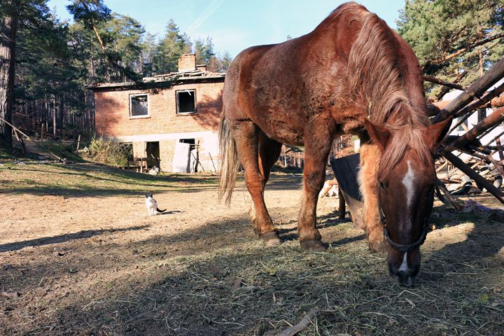 Mountain horse - Photography from Bulgaria