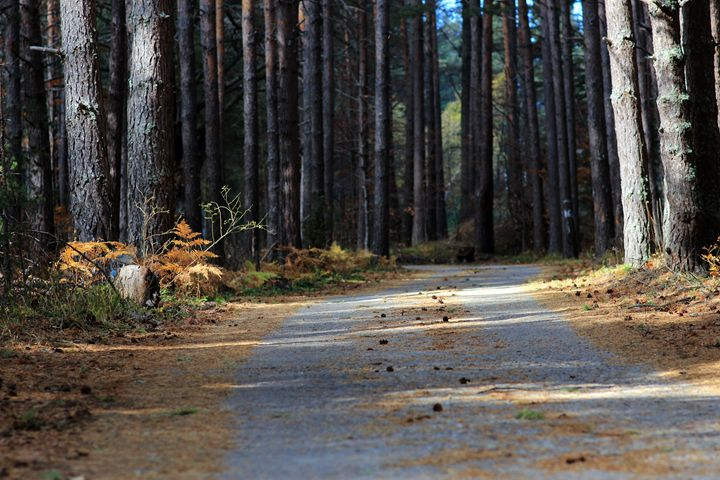 Autumn road - Photography from Bulgaria