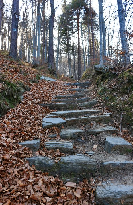 Autumn path - Photography from Bulgaria