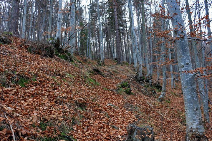 November woods - Photography from Bulgaria