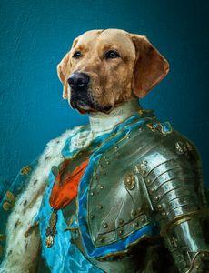 Dog portret