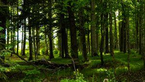 Warm Spring Forest