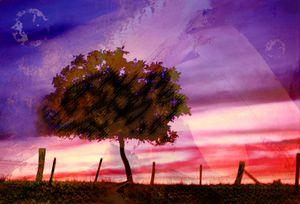 un arbre entre deux mondes