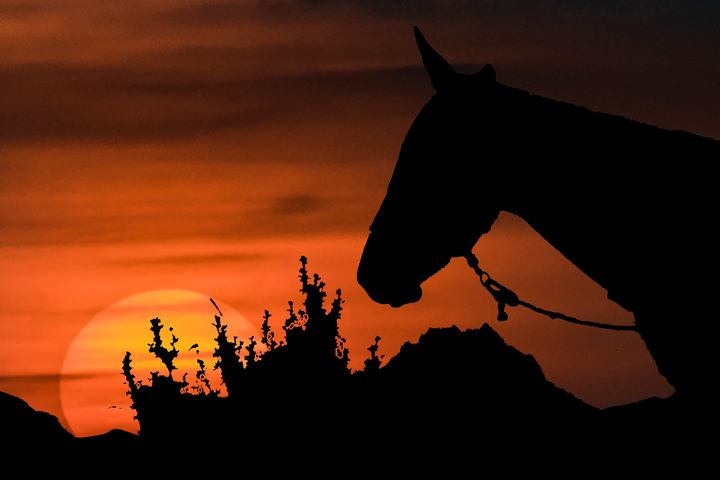 Sunset Scene with Horse Silhouette I - Photography