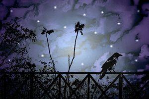 Fantasy Dark Night Scene Illustratio - Photography