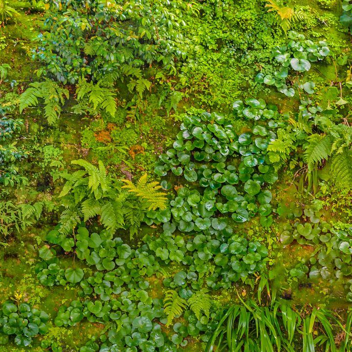 Vivid Nature Texture Background - Photography