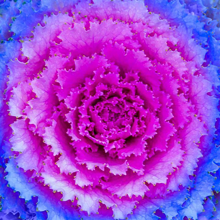 Top View Pink and Blue Plant - Photography