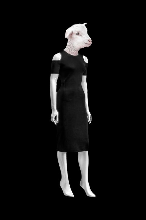Lamb Head on Woman Mannequin Body Is - Photography