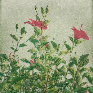Botanical Vintage Style Motif Artwor