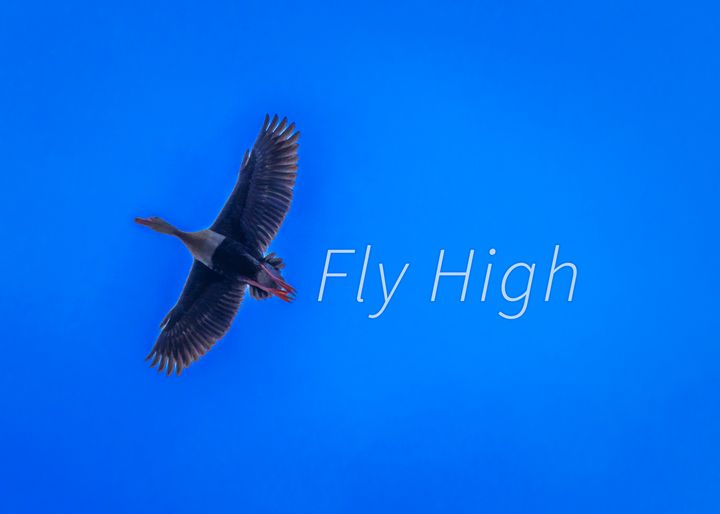 Fly High Concept Background Photo - Photography
