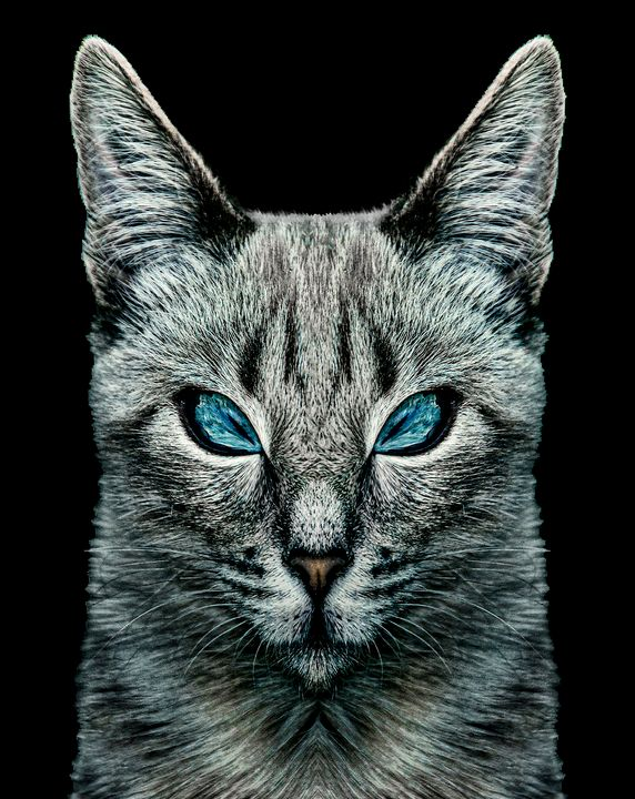 Evil Cat Portrait Digital Art - Photography