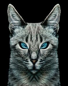 Evil Cat Portrait Digital Art