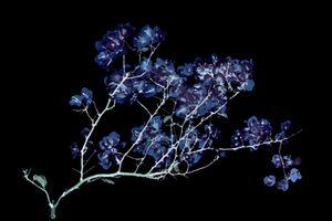 Photo Illustration Flower Over Black