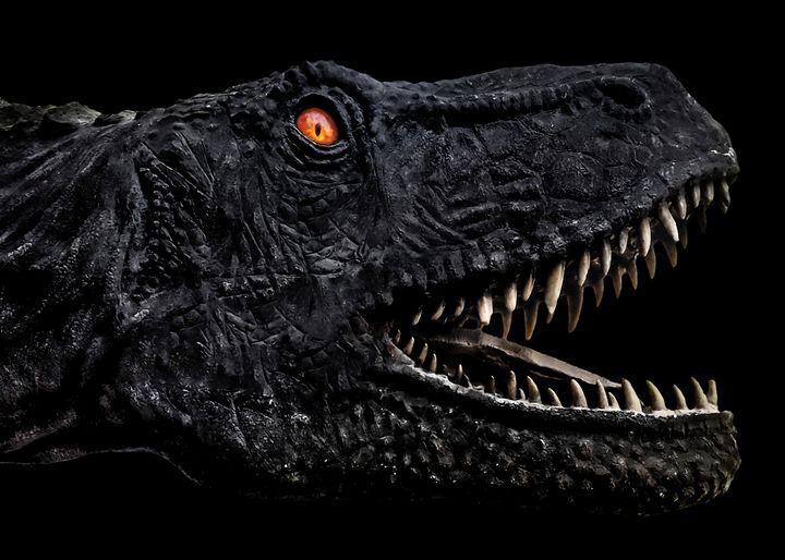 Trex Dinosaur Head Dark Poster - Photography