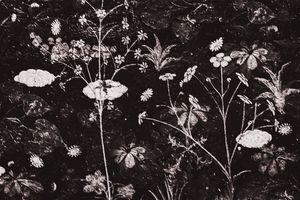 Floral Scene Art Detail