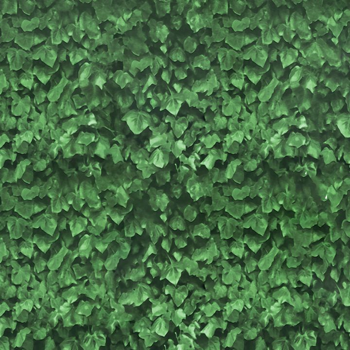 Texture Plants Pattern Background - Photography