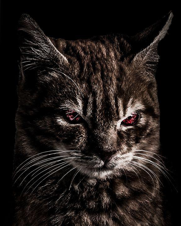 Creepy Kitten Portrait Photo Illustr - Photography