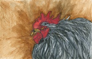 CLUCK OFF by T.Kelch-Beason