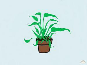 My house plant