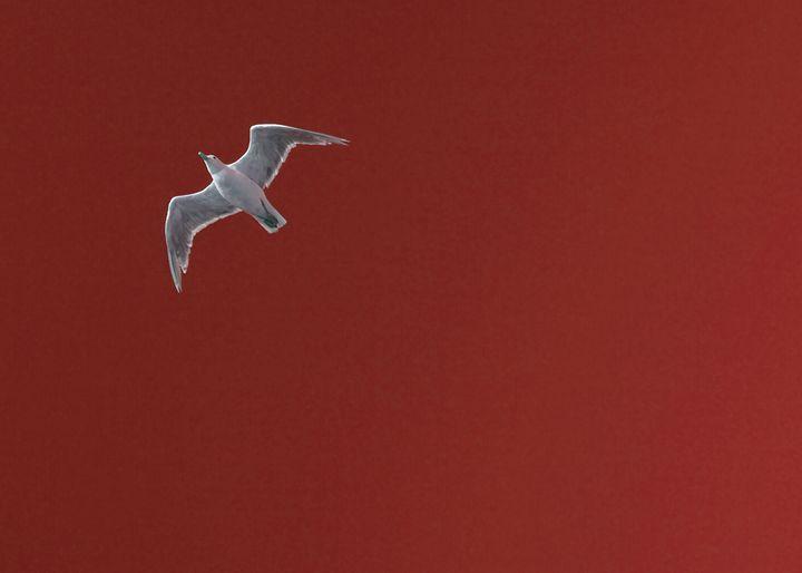 Seagull in Terra Cotta - Julie McDaniel Fine Art
