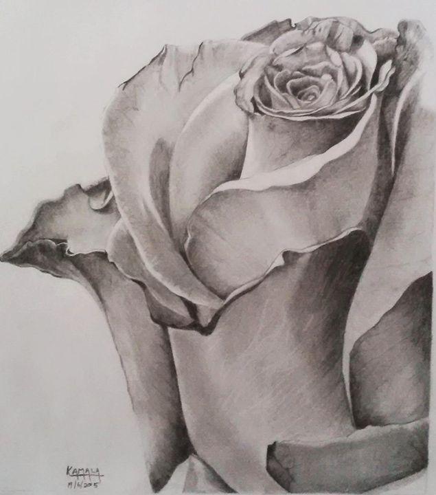 Love Rose - Kamala durga
