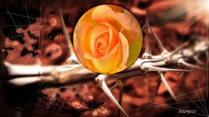 Thorns of Love