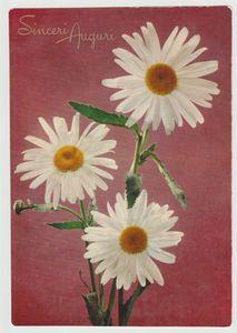 Vintage postcard printed in Italy.