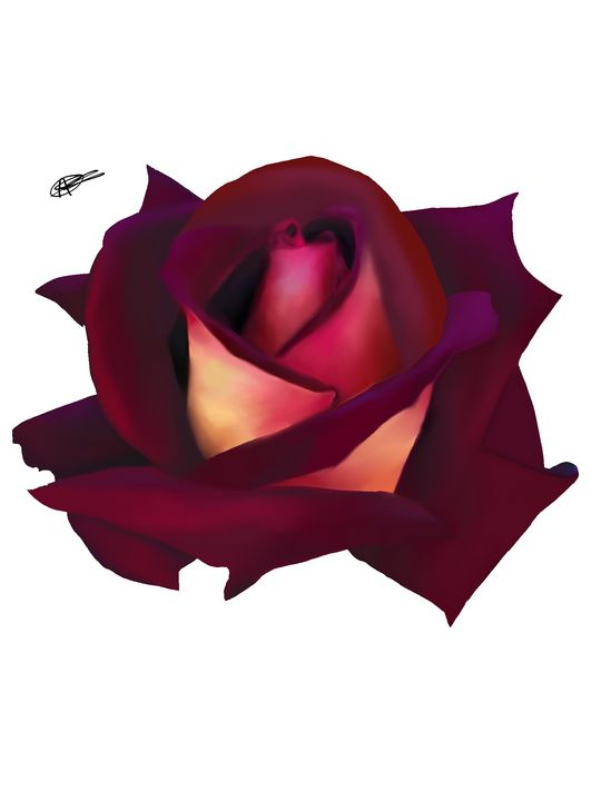 Rose - Procreate