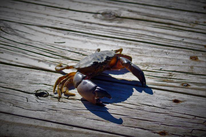 Crabby McCrabberson - beSTOWEd photography