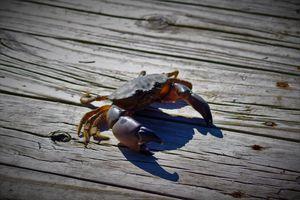 Crabby McCrabberson